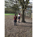 Estimating the height of a tree