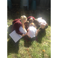 Bug hunting Science investigation