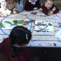 Sorting natural materials in a Venn diagram