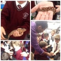 Thanks Mr Khan for teaching us about these animals