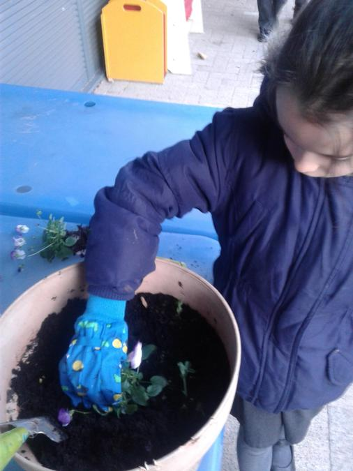 Learning how to plant flowers