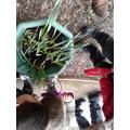 Plant exploration
