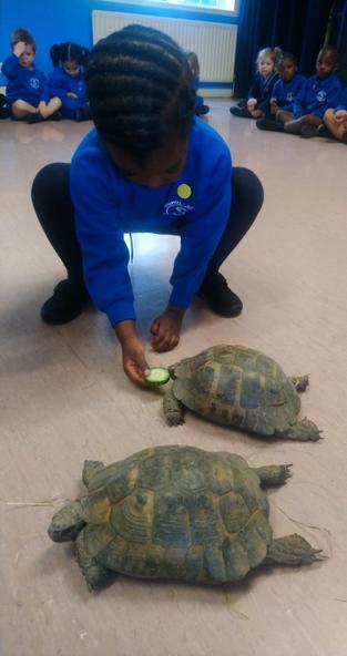 Temikemi feeding Tiny the Tortoise