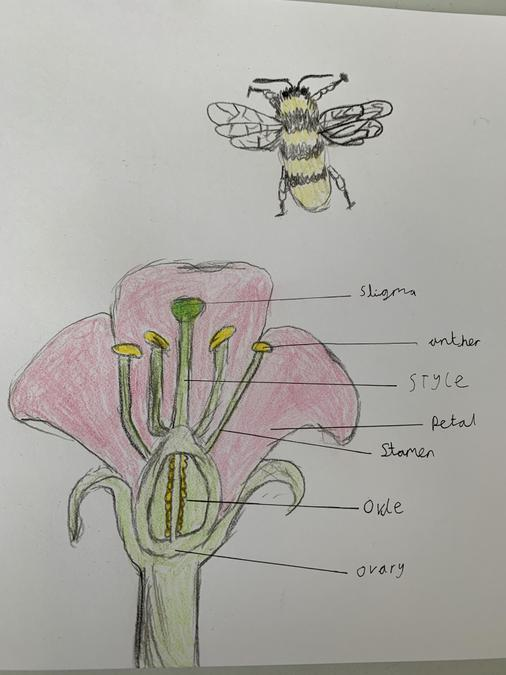 A fantastic scientific diagram and bee Fin.