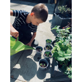 Thomas Gardening