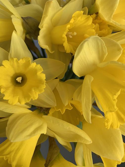 Something yellow - Mrs Jukes