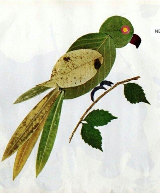 Can you make a bird using nature?