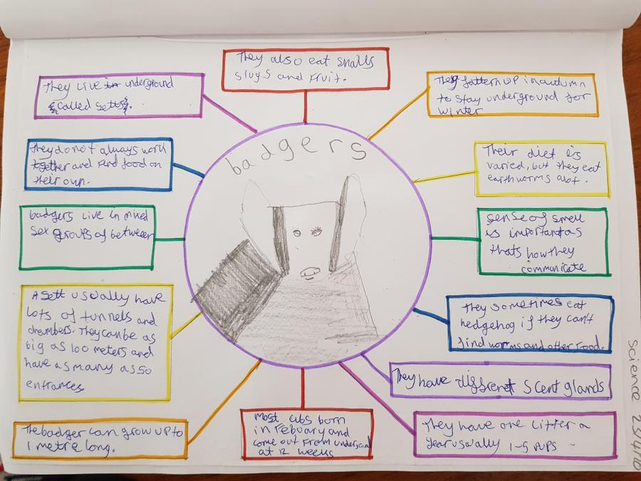 Mammal research by Rosie