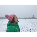 Rose catching a snowflake