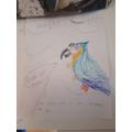 Felipe's parrot