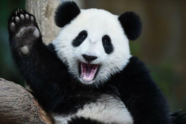 Panda Class- Miss Davies