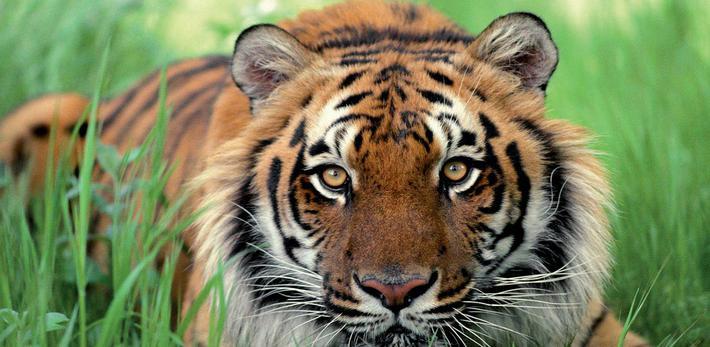 Tiger Class- Miss Lamb