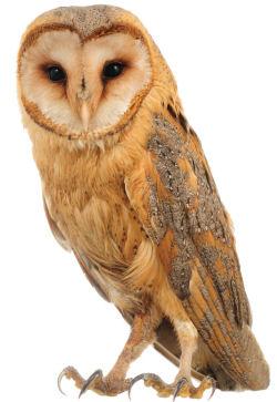 OWL CLASS: Mrs Plimmer
