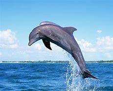Dolphins - Mrs Tabberer