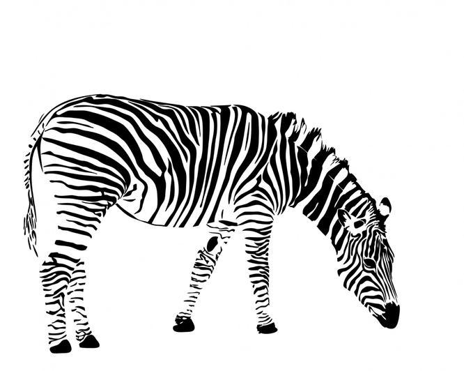 Mrs Faulkner - Zebra Class