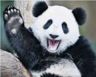 Mrs Pashley - Panda Class