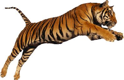 Miss Lamb - Tiger Class