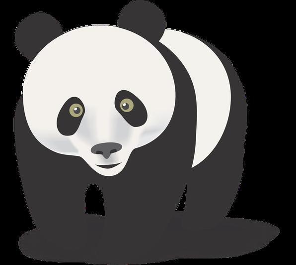 Miss Davies - Panda Class