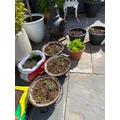 William's Planting