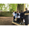 We explored the texture of the trees