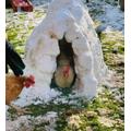 Amalie made a chicken igloo.