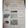 Holly - habitat adaptations