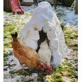 The chickens seem to like it.