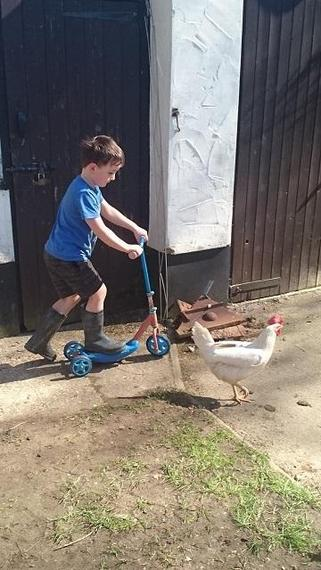Getting some exercise (along with the chicken)