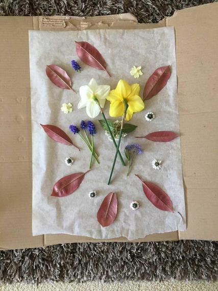 SD's daffodil art