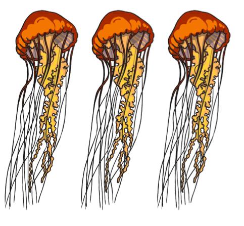 How many jellyfish?