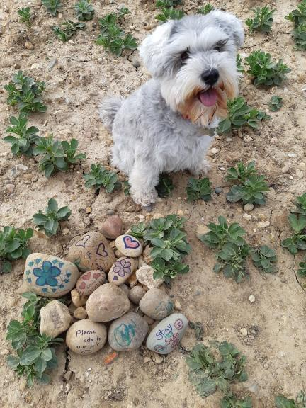 Clever dog finding 'happy stones'.