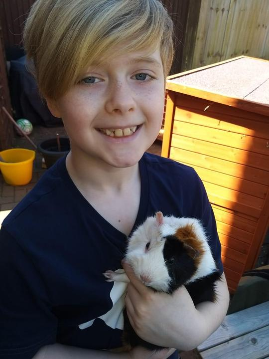 Looking after the school guinepigs.