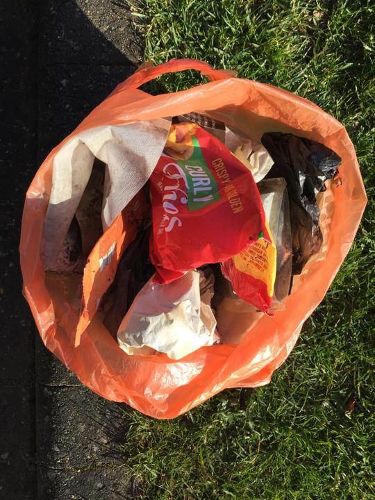Combining a dog walk and litter collection