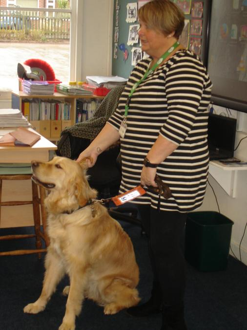 A guide dog came to visit us.