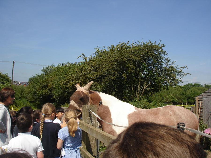 The horses were very pleased to see us!