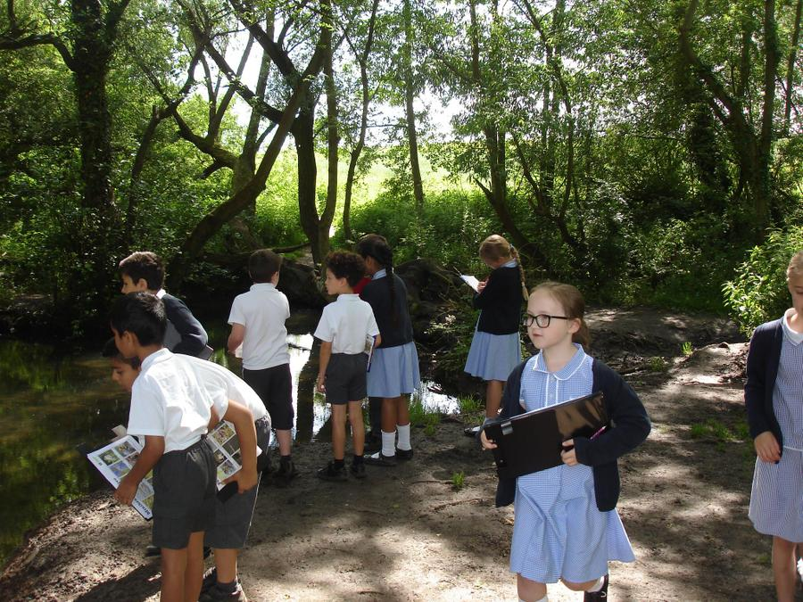 Exploring the brook for wildlife!