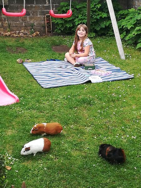 Erin's guinea pigs look like they are having fun.