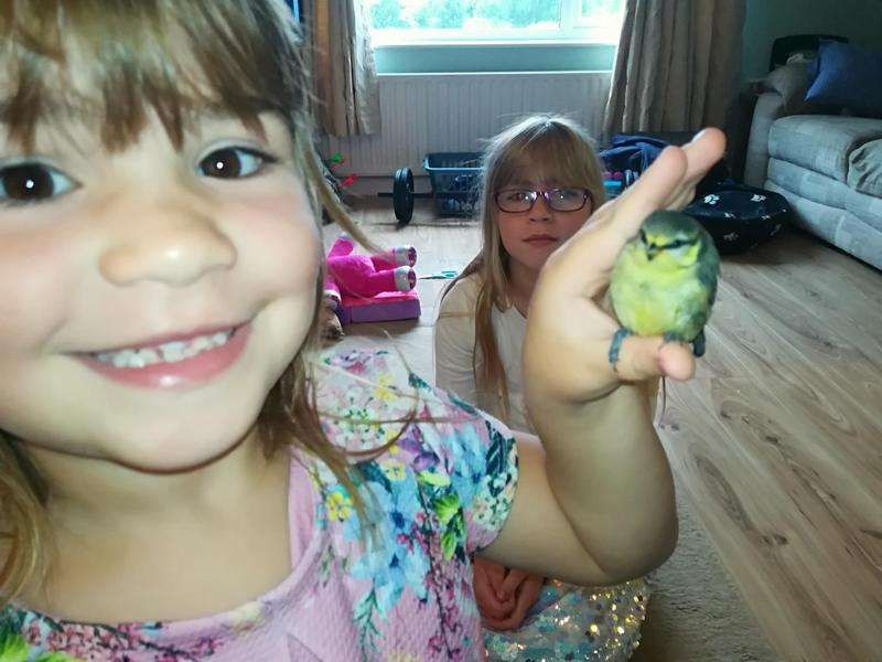 Erin saved a bluetit. :)