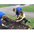 Planting outside Class 6