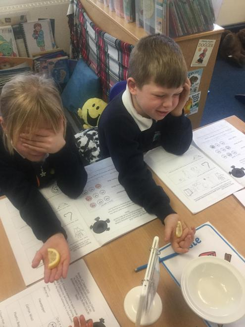 Y1 - Humans - 5 Senses Investigation