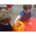 Investigating a pumpkin