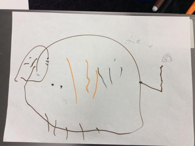 We drew pictures of stripey tigers