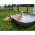First bath! 29/05/16