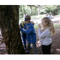 Recognising species of trees blindfolded