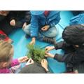 Plant investigation.