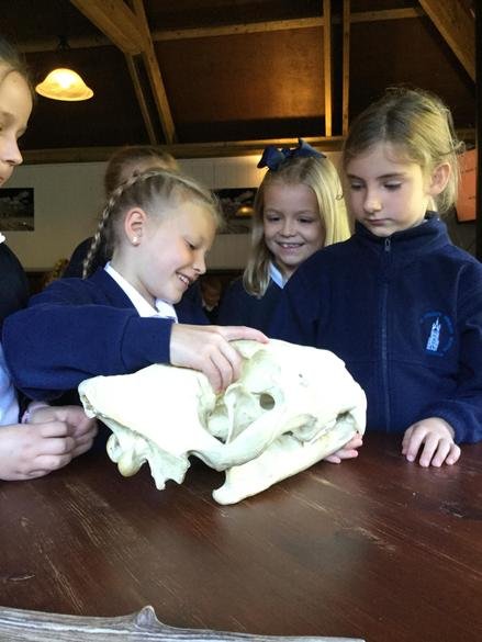 Year 3 and 4 Visit Port Lympne Zoo