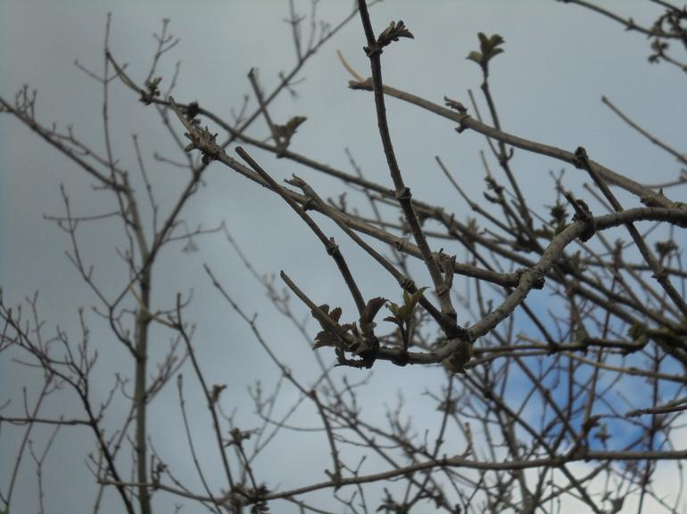 We saw some buds on the trees.