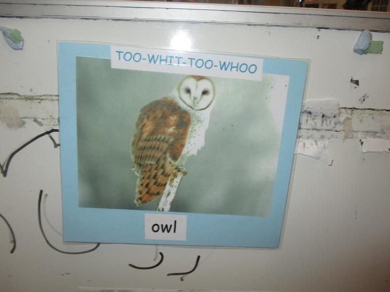 The Owl went TOO-WHIT-TOO-WHOO