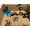 Jacob H elephant enclosure