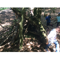 We love den building!
